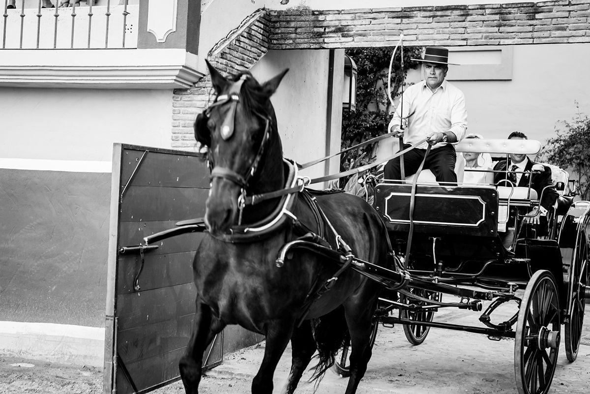 espectáculo de caballos cortijo cortés