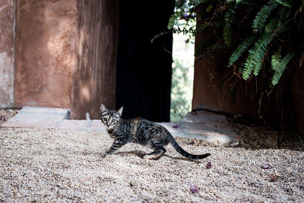 fotografia de gato